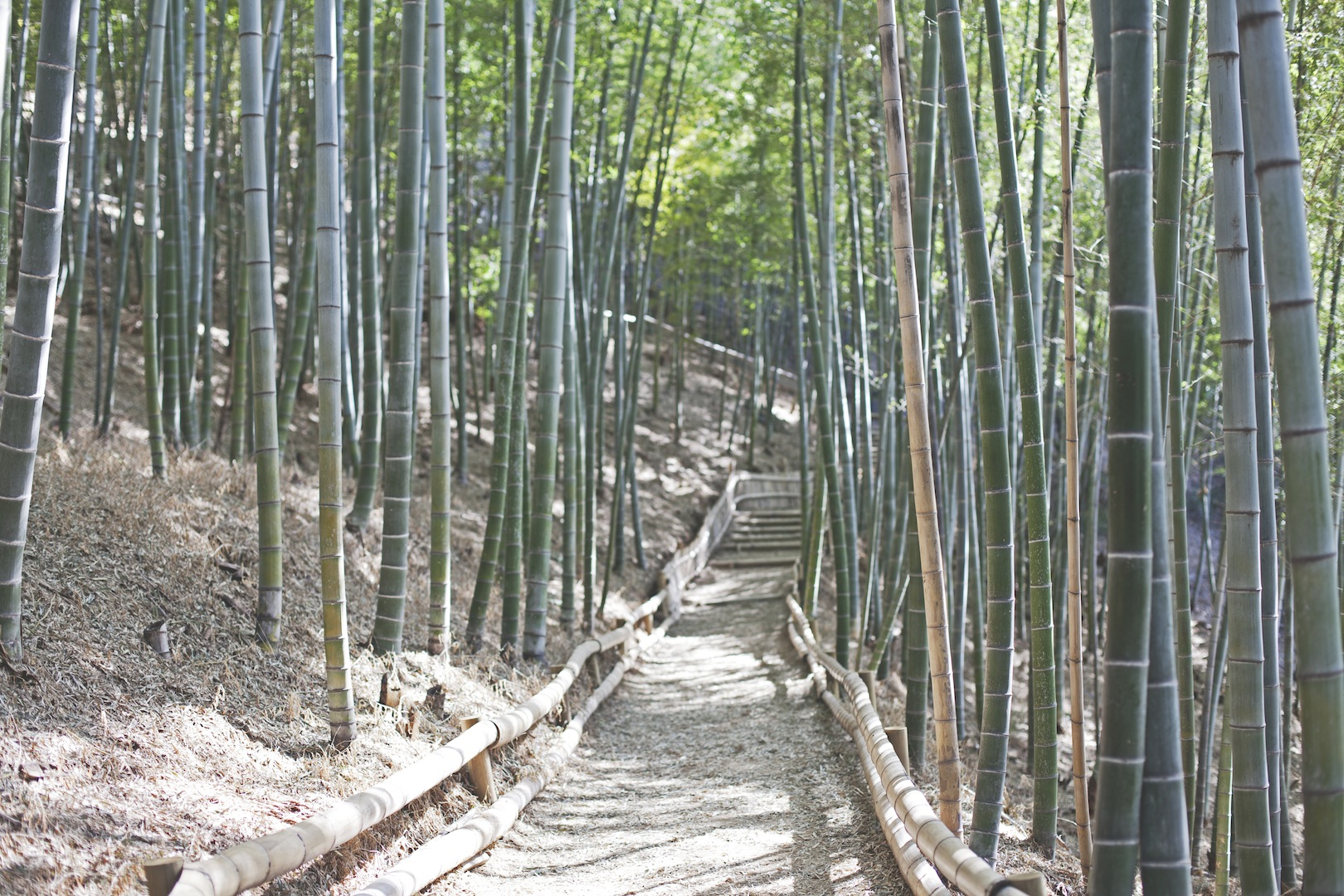 A trip to the bamboo forest
