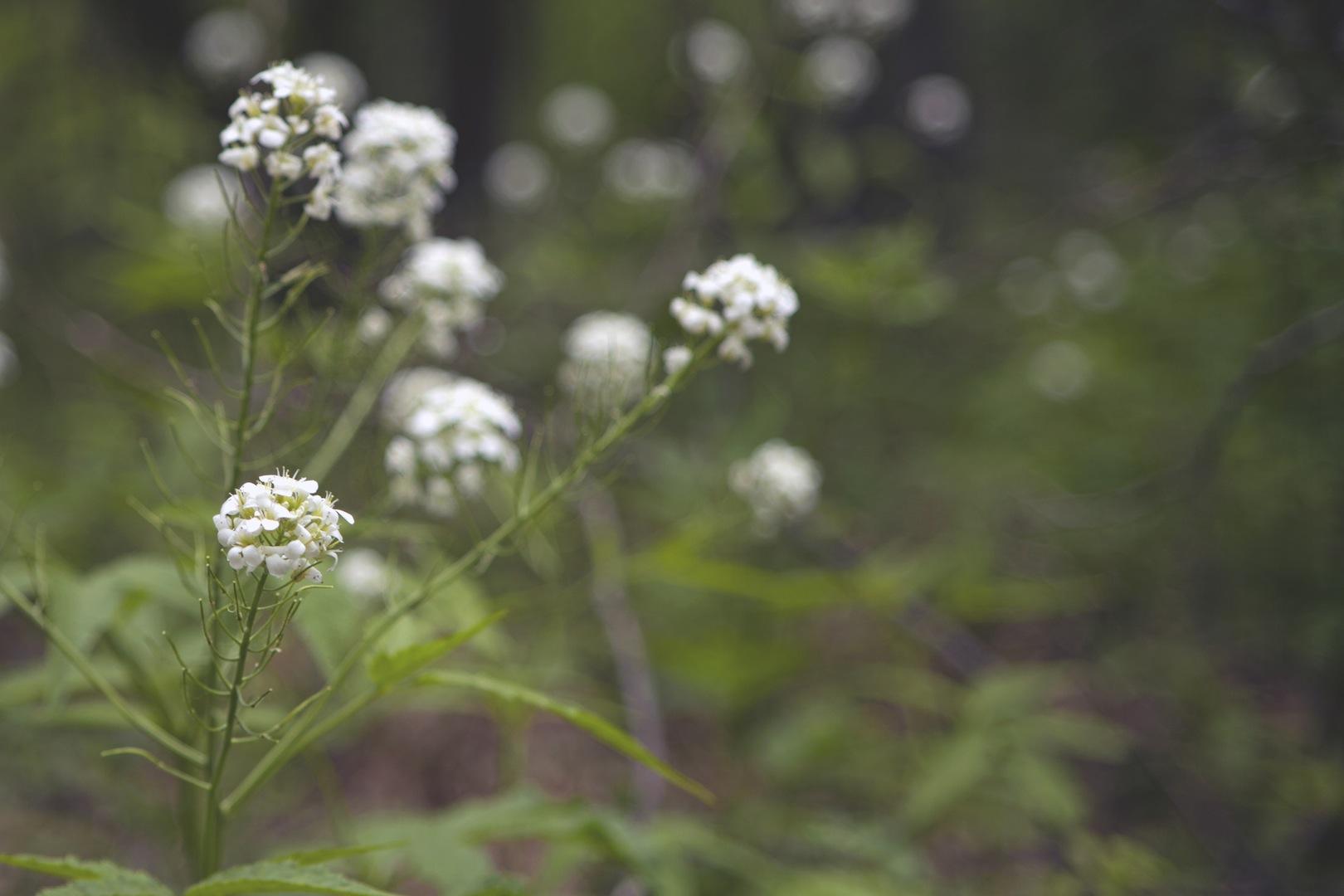 White flowers-Beautiful!