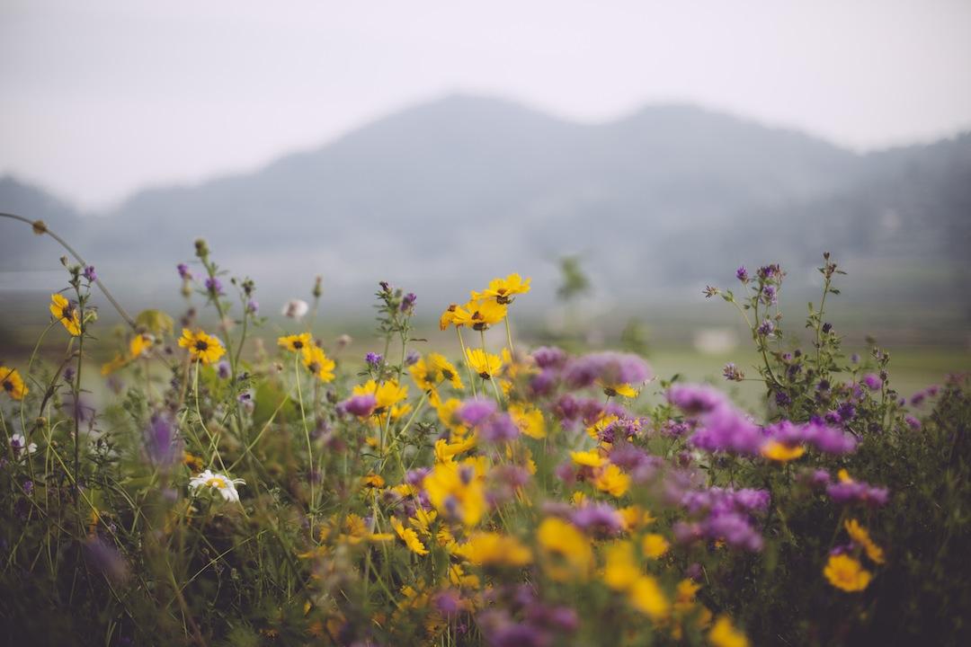 Wildflowers in Boseong