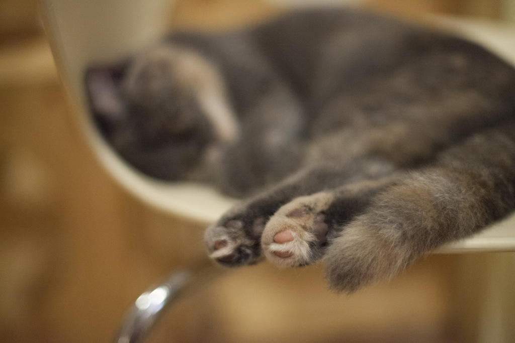 Cat Cafe, Busan, South Korea