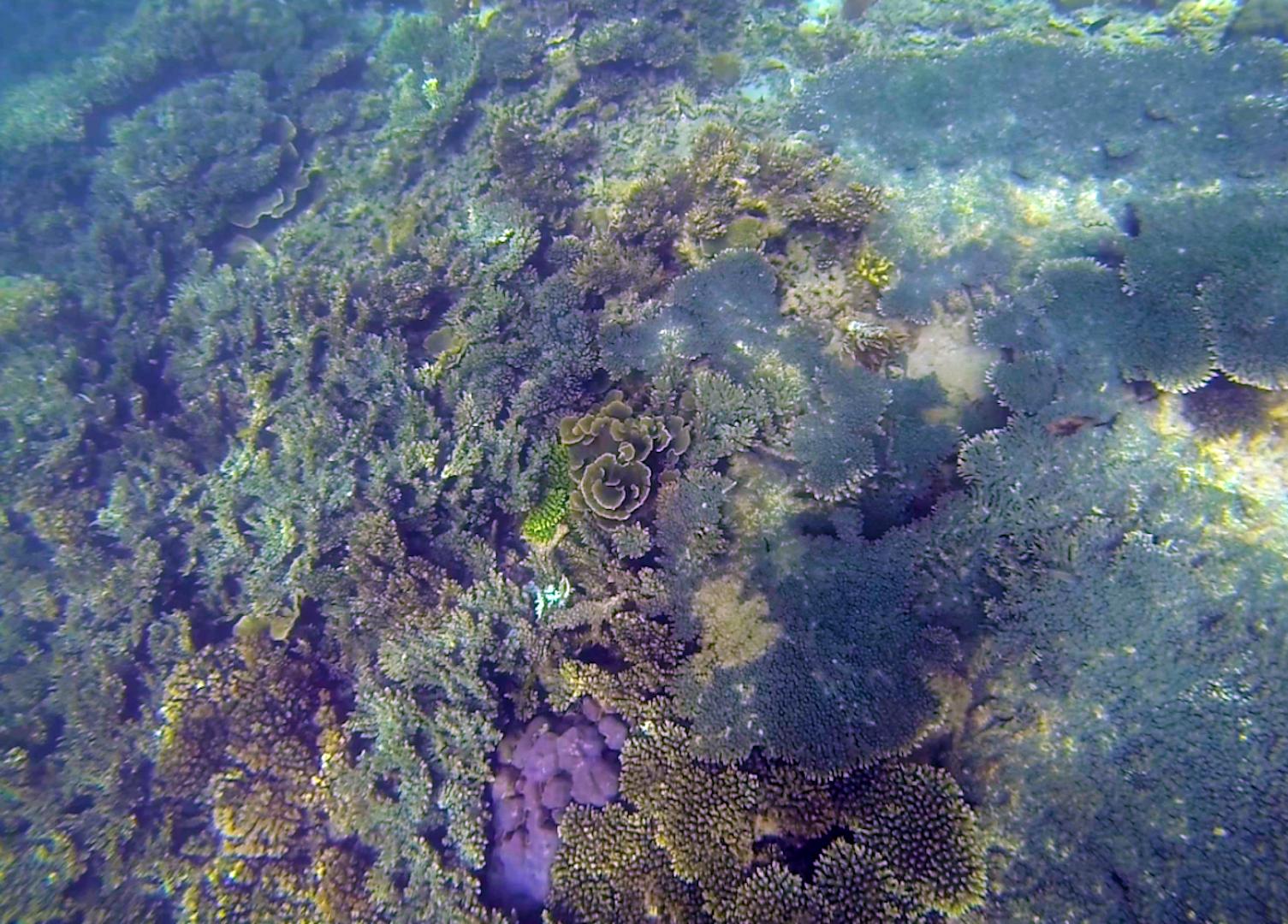 Snorkeling Borneo