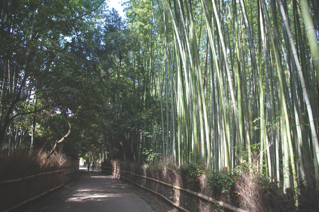 Bamboo Forest, Kita-Ward, Kyoto, Japan
