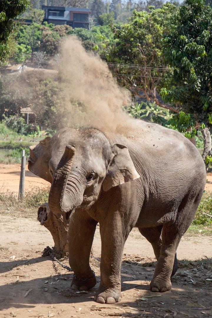 Dirt Bath, Baan Chang Elephant