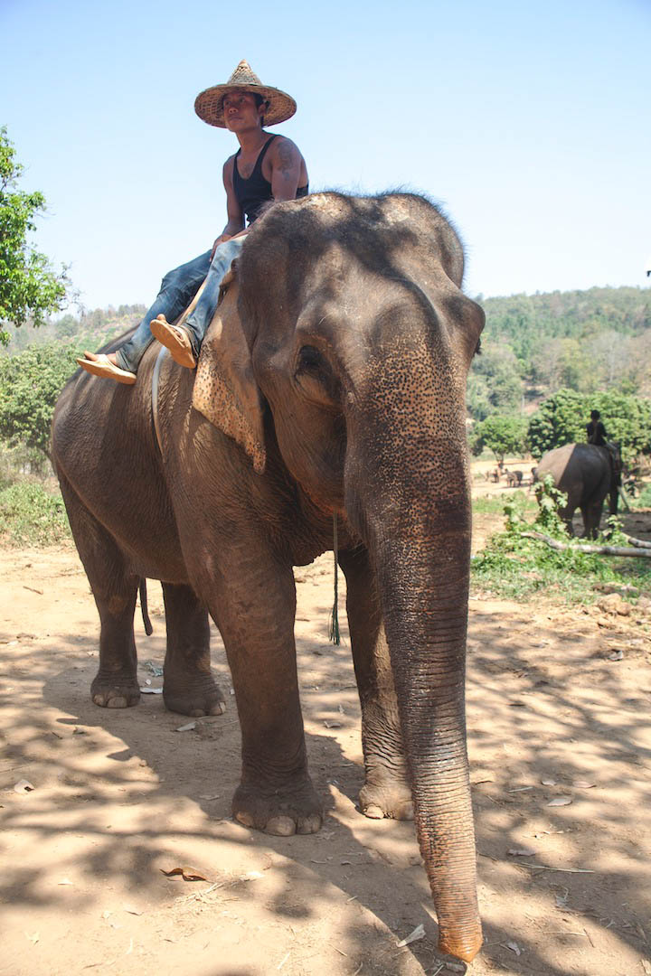 Mahout on his elephant in Baan Chang
