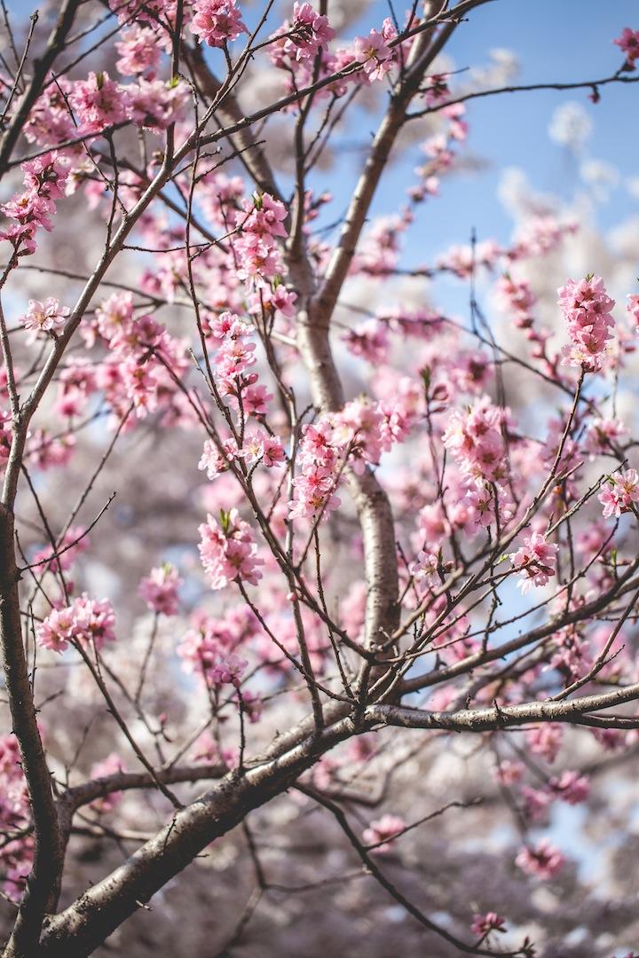 Springtime in Geoje, South Korea