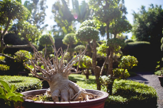 Phuket Botanical Garden (10 of 20)
