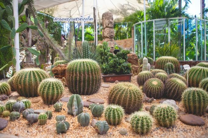 Cactus Garden in Phuket
