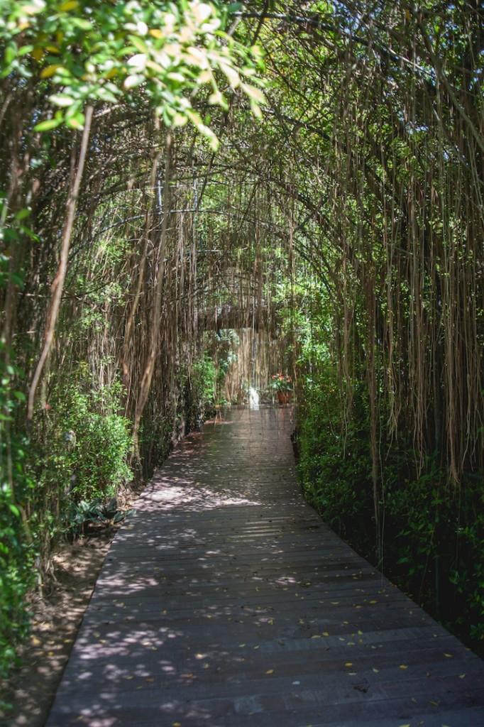 Phuket Botanical Garden (17 of 20)