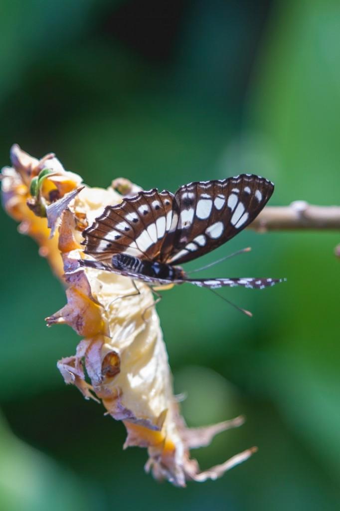 Phuket Botanical Garden (20 of 20)