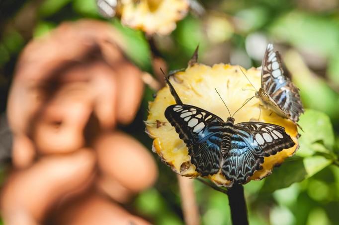 Phuket Botanical Garden (21 of 20)