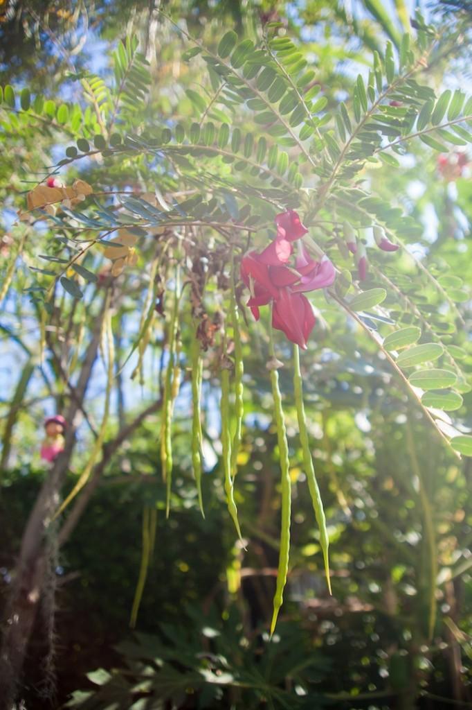 Phuket Botanical Garden (8 of 20)