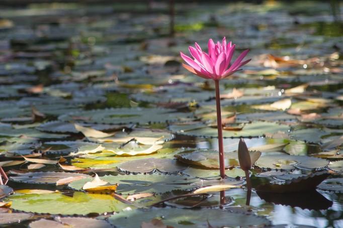 Phuket Botanical Garden (9 of 20)