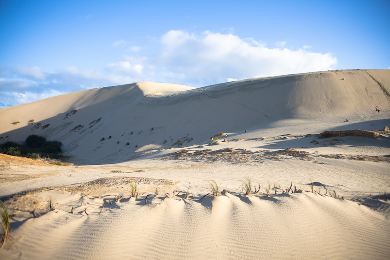 Sand Dunes, Northland, New Zealand