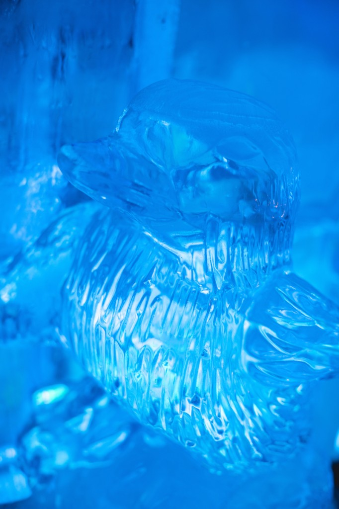 Minus 5 Ice Bar-10