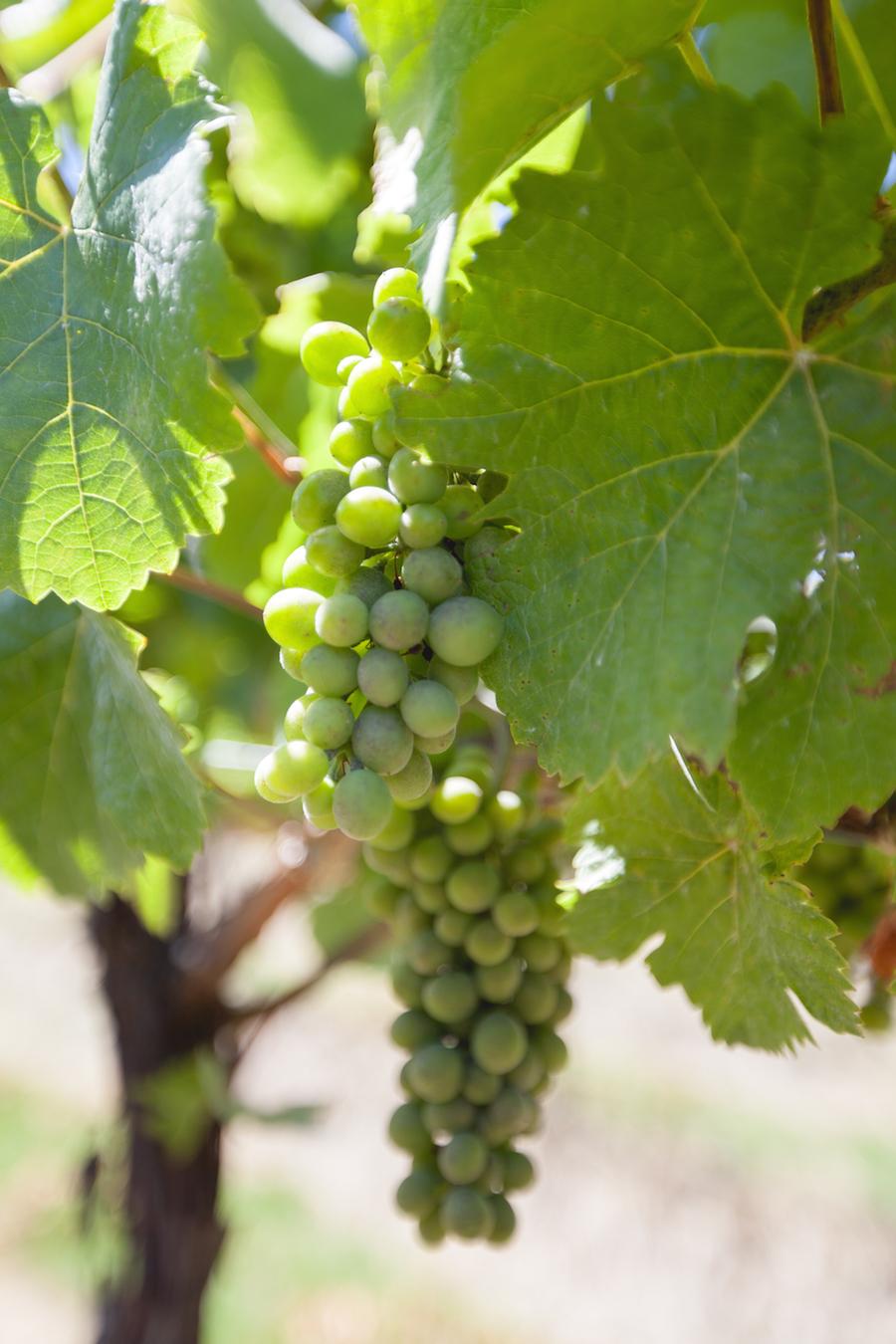 Wine Tasting-16
