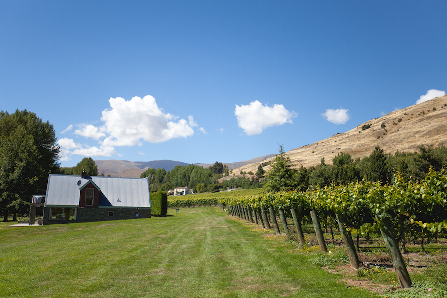 Amisfield Winery and Bistro