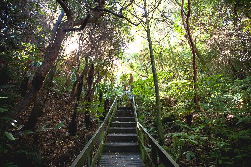Fall in Dunedin (15 of 17)
