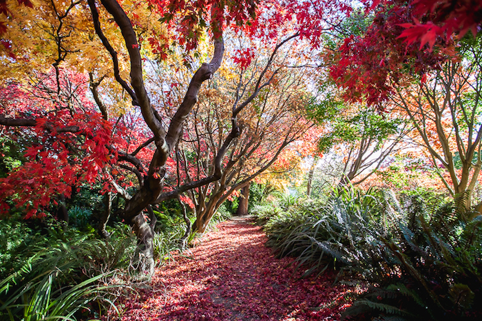Fall in New Zealand