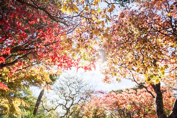 Fall in Dunedin (17 of 17)