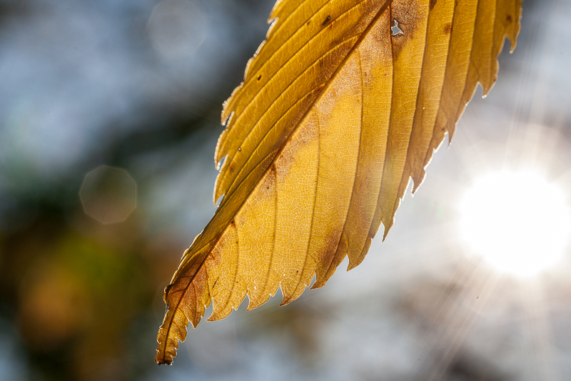 Fall in Dunedin (4 of 17)