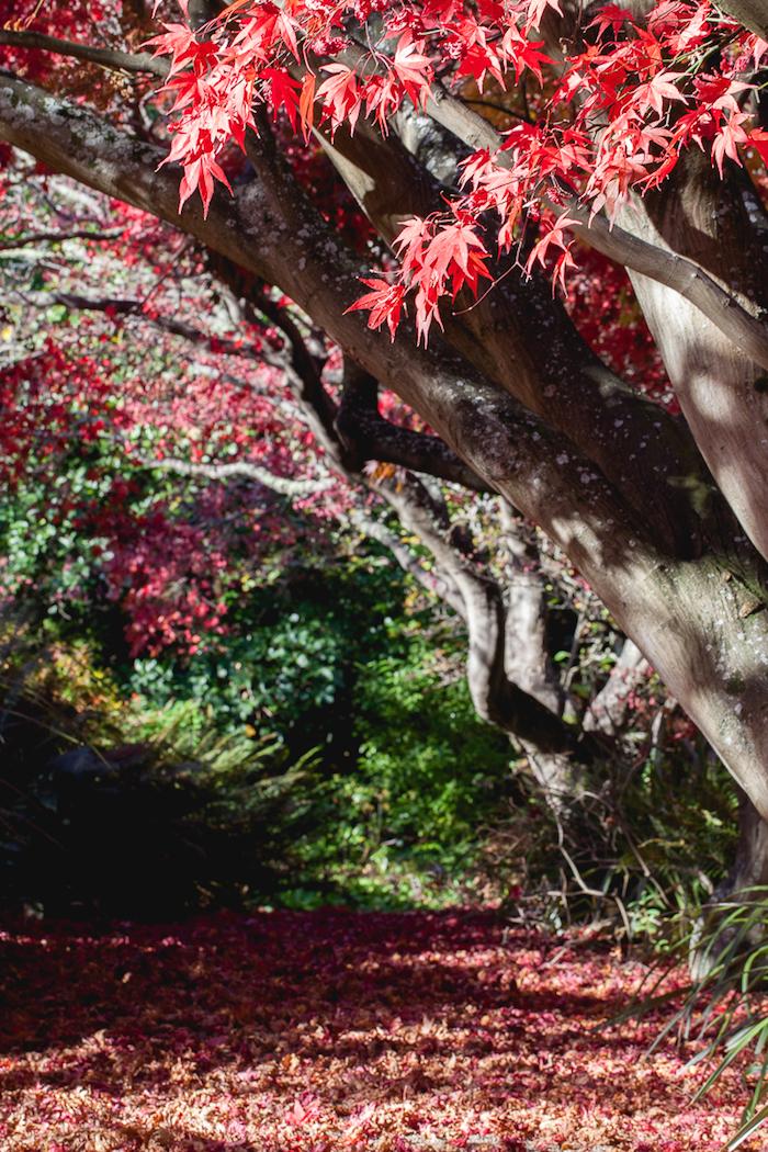 Fall in Dunedin (6 of 9)
