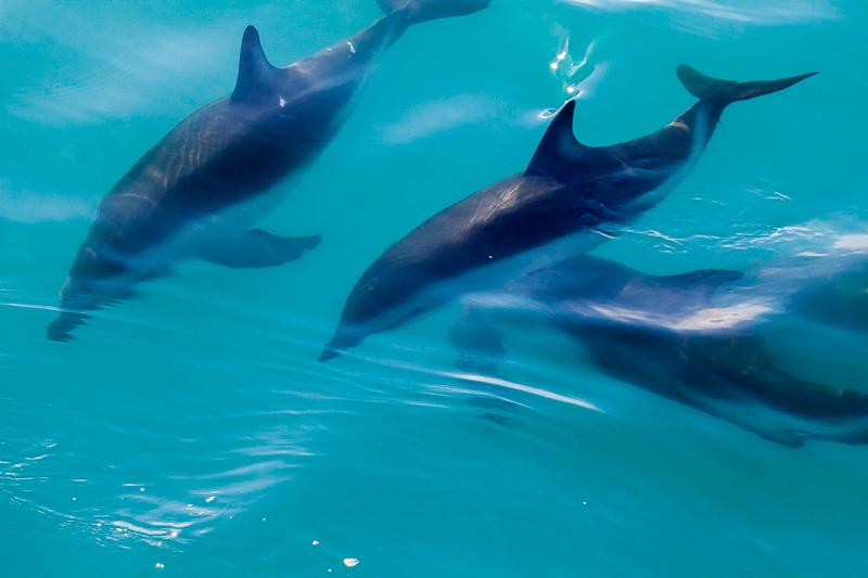 Kaikouradolphins-11