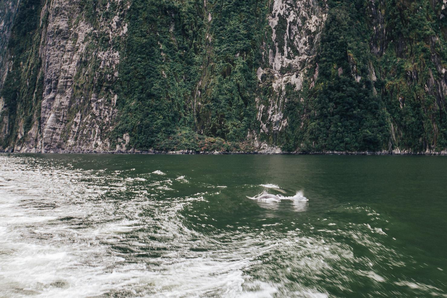 Milford Sound-31