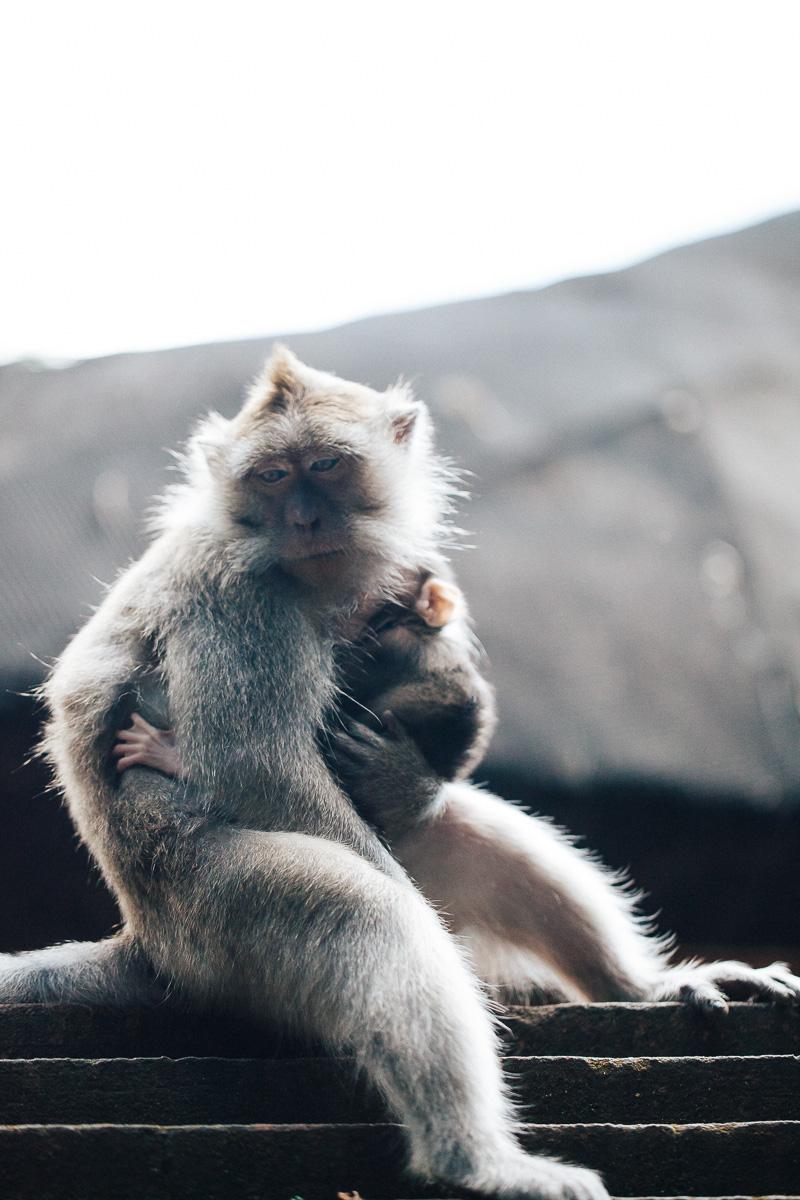 Monkey Forest-19