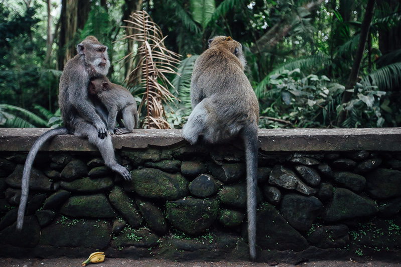 Monkey Forest-2