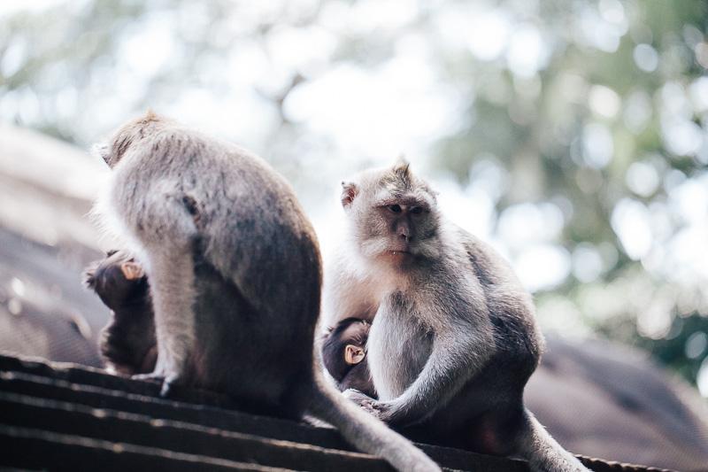 Monkey Forest-20