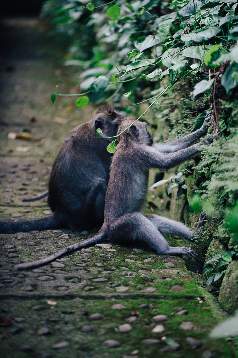 Monkey Forest-21