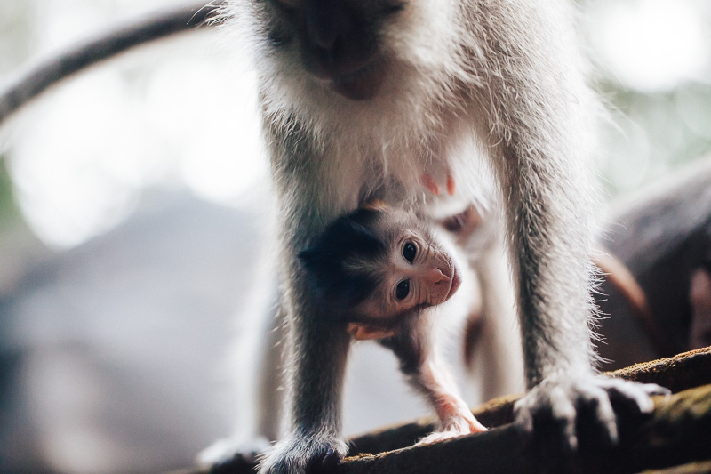 Monkey Forest-22