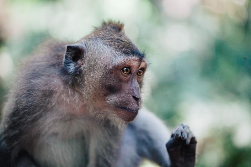 Monkey Forest-29