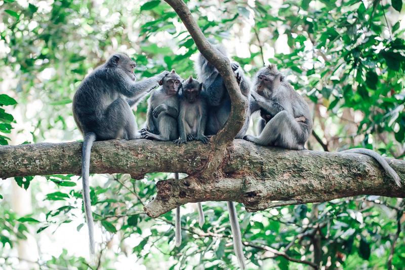 Monkey Forest-30