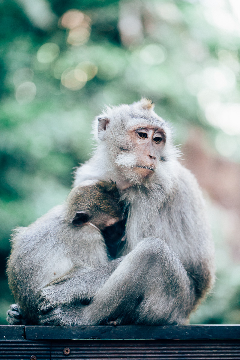 Monkey Forest-31