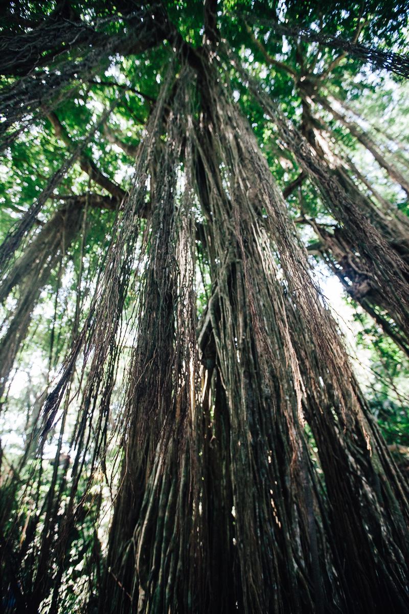 Monkey Forest-33