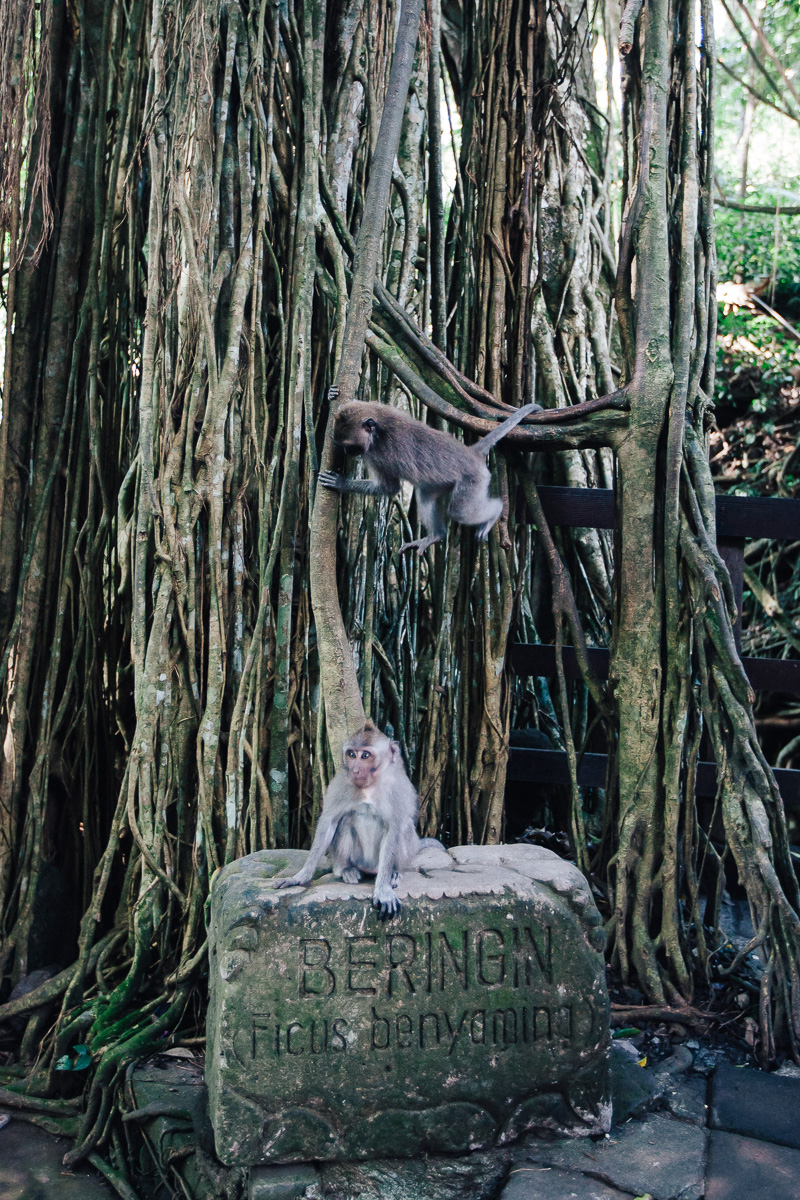 Monkey Forest-34
