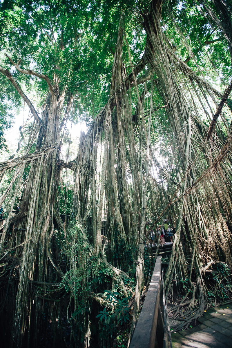 Monkey Forest-36