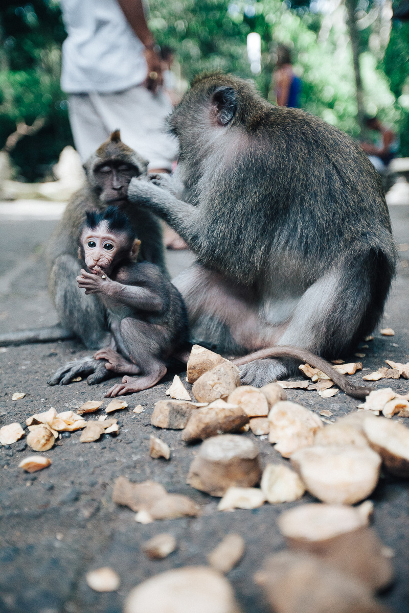 Monkey Forest-5