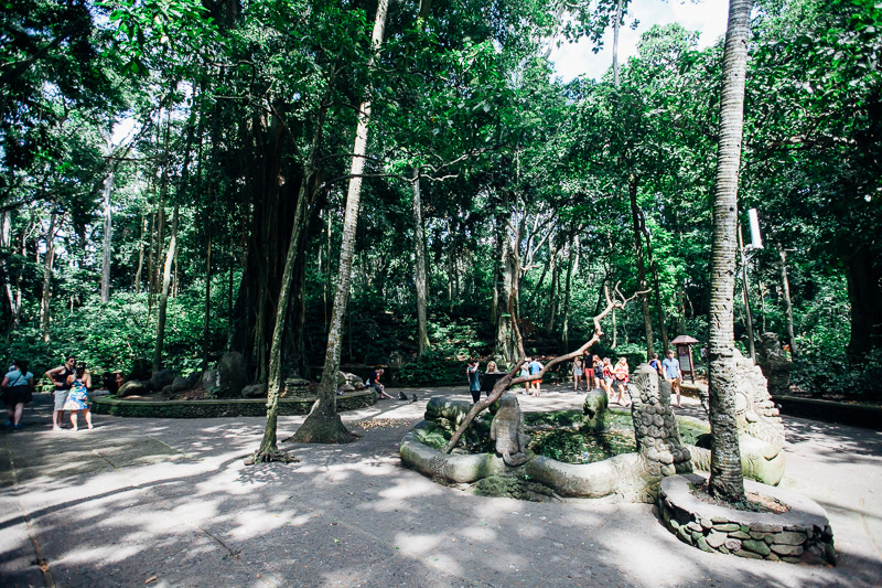 Monkey Forest-6
