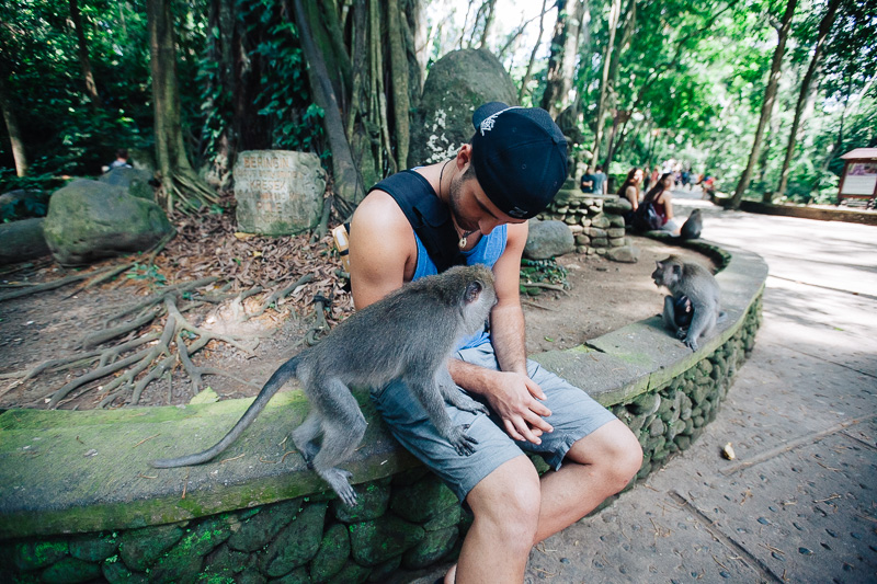 Monkey Forest-8